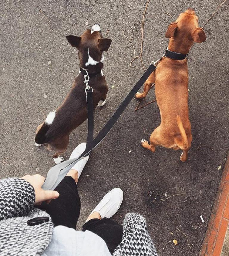 zwei Terrier von oben gehen Gassi. Beide Leinen und Halsbänder sind aus Baumwolle.