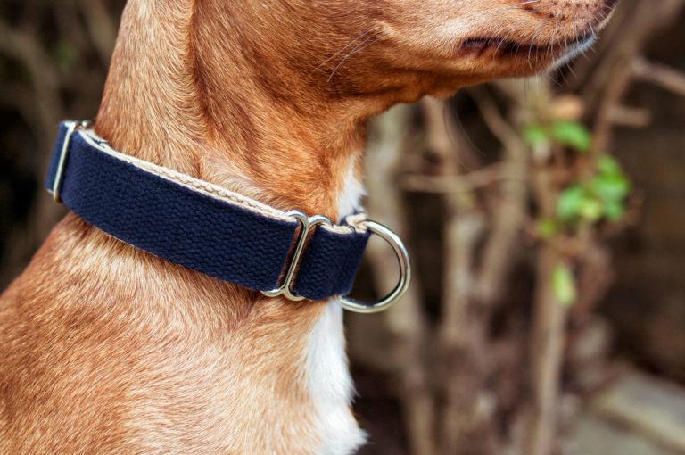 An einem Hundehals ist ein dunkelblaues Halsband aus Baumwolle von Vackertass. Die Innenseit ist beige.