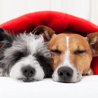 Hundekissen & Hundedecken