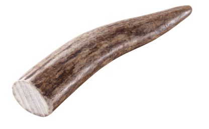 Eine Geweihstange als Kauartikel für den Hund