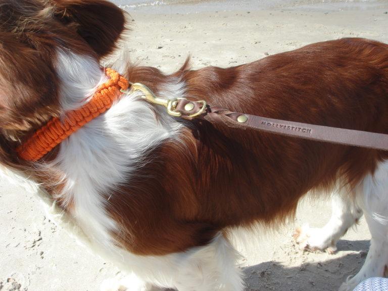 Spaniel mit Lederleine am Strand. Er trägt ein geflochtenes Halsband aus Segeltauen.