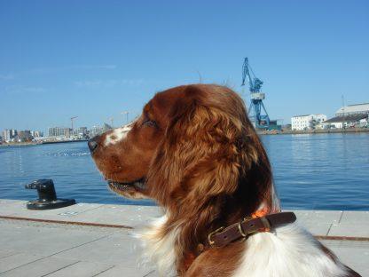 Emil am Hafen von Aarhus in Dänemark. Er trägt ein Halsband von Molly and Stitch..