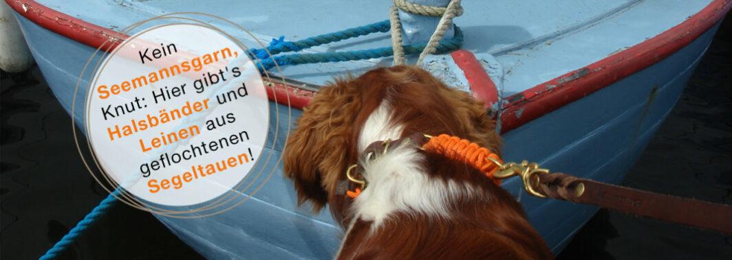 Hund sitzend vor einem hellblauen Boot. Er trägt ein orangefarbenes Halsband von Molly and Stitch.