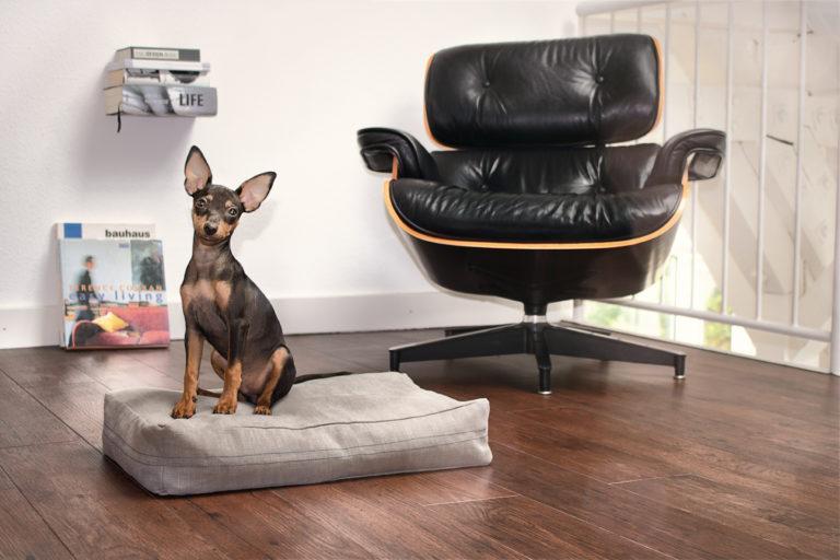 Kleiner schwarzer Hund sitzt auf einem grauen Hundekissen. Daneben steht ein Designer-Sessel.