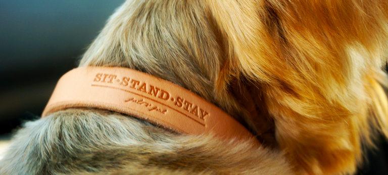 Hund trägt ein helles Lederhalsband mit Prägedruck der Firma sit-stand-stay