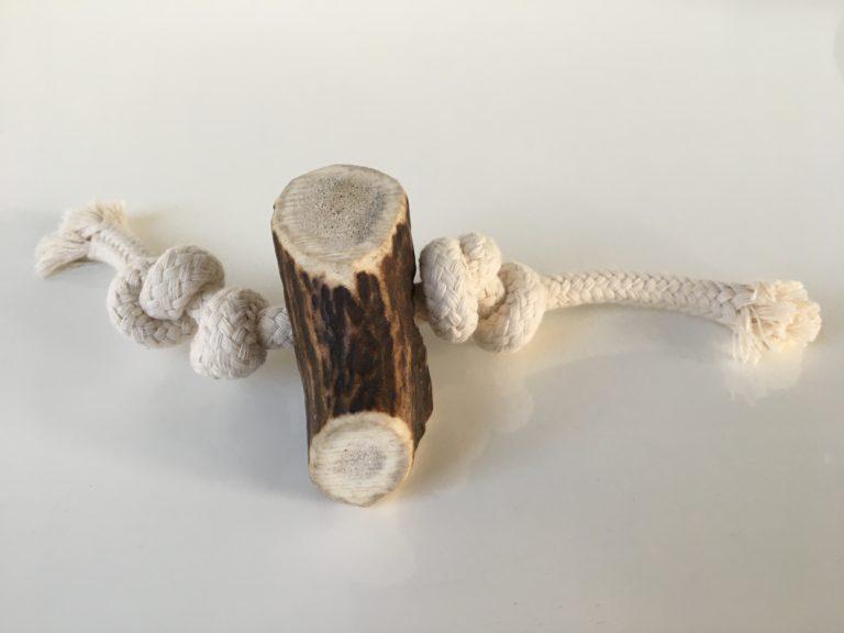 Eine Abwurfstangen vom Rothirsch zum Kauen für Hunde in Größe S. Stück ist an ein Seil geknotet.
