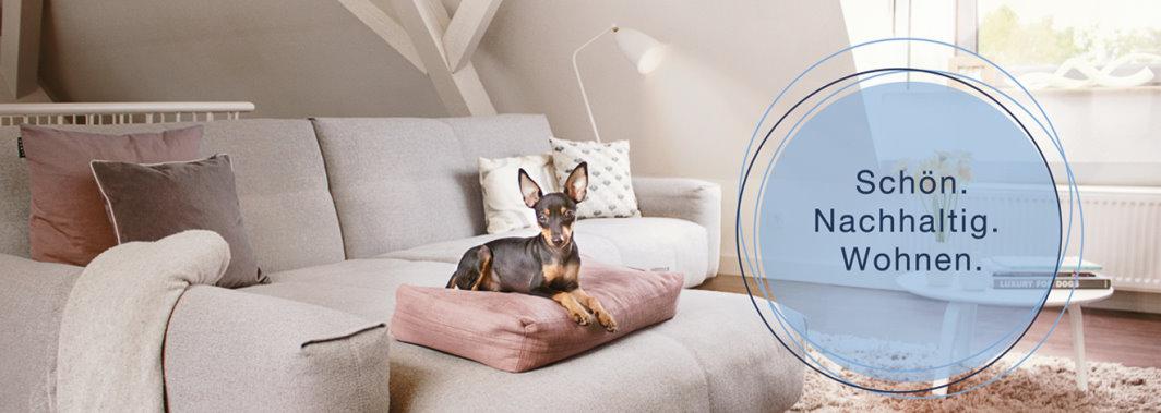 Kleiner Hund liegt auf rosa Hundekissen von whatlassielikes