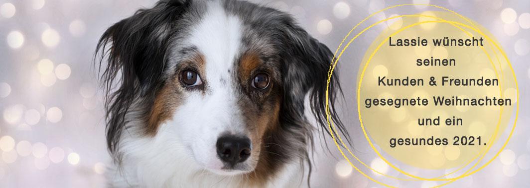Mini Aussie Lassie wünscht schöne Weihnachten