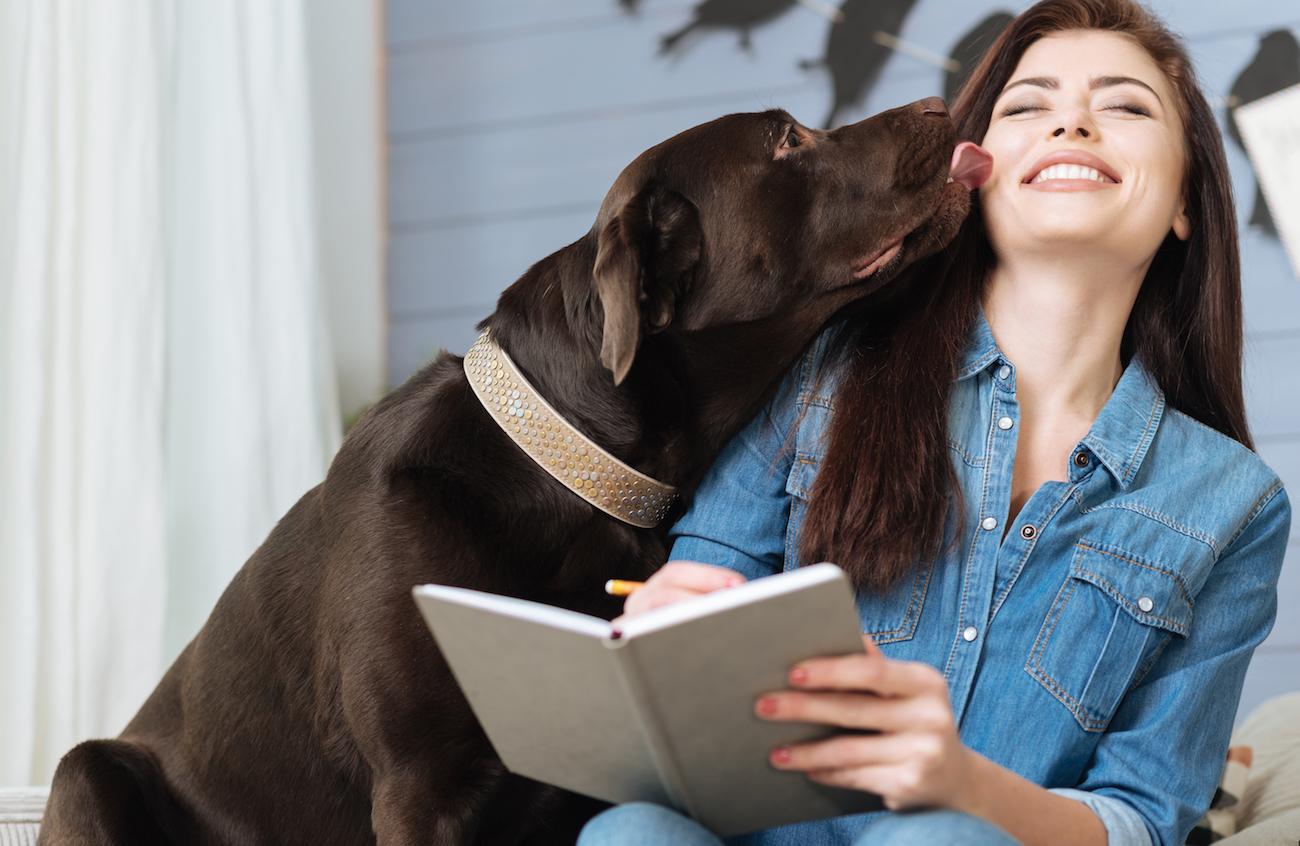 Labrador küsst Frau. Sie lächelt.