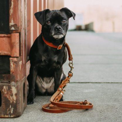 kleiner schwarzer Hund mit hellbrauner Leine sitzt auf der Straße