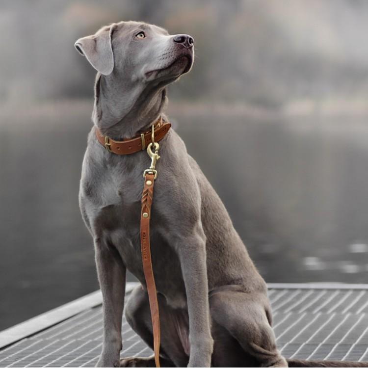 grauer Hund mit Halsband und Leine in Hellbraun von Molly and Stitch