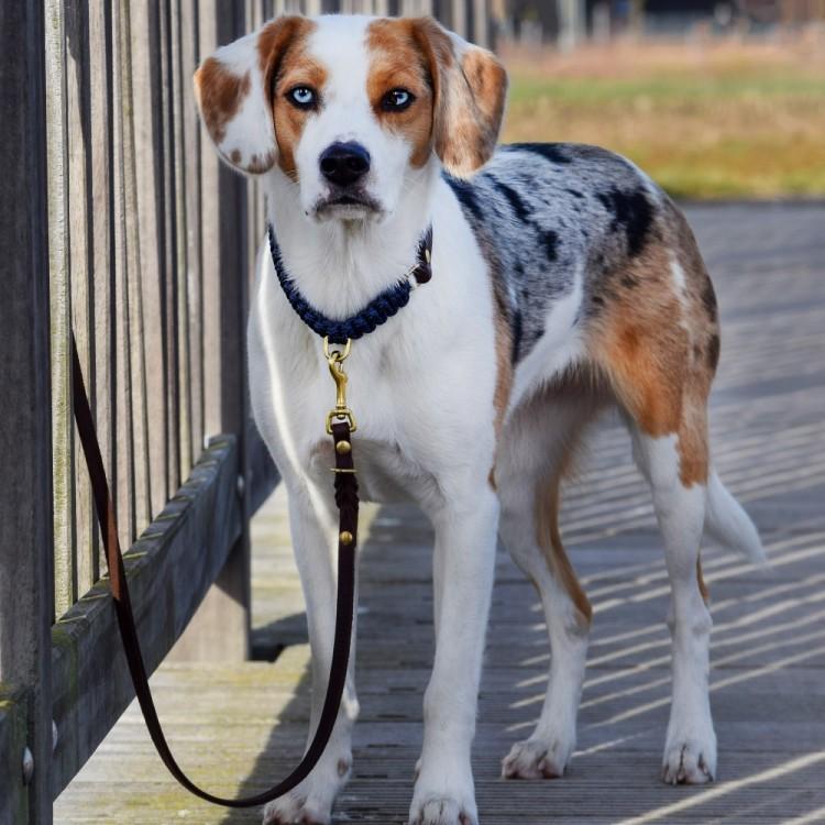 gefleckter Hund angeleint am Zaun mit Leine von Molly and Stitch