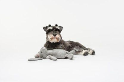 Schnauzer mit Hundespielzeug Rupert von Lilly Pet Shop