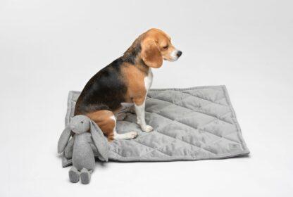 Beagle sitzt auf grauer, gesteppter Hundedecke