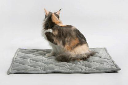 Katze sitzt auf grauer, gesteppter Decke