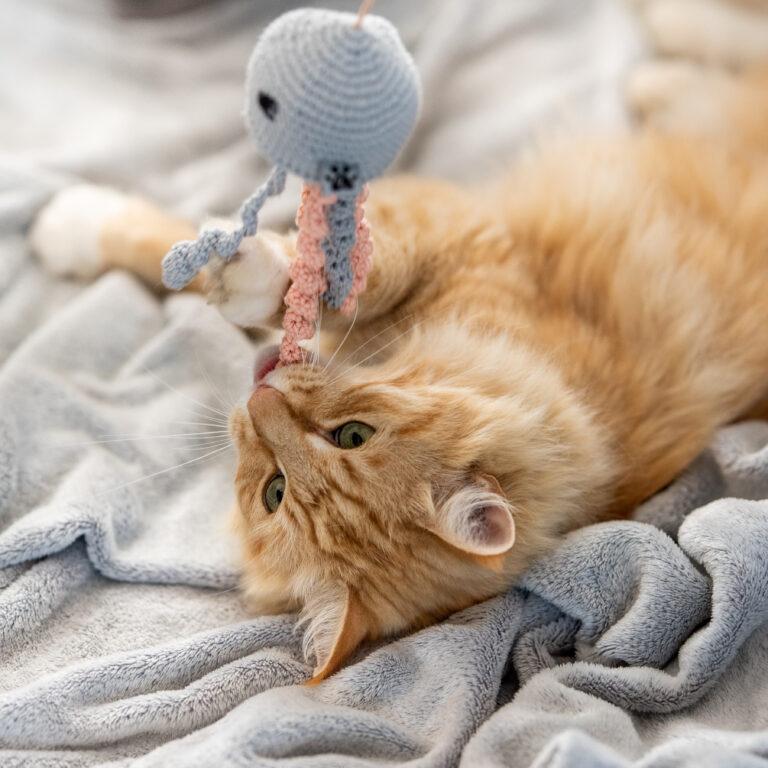 Katze spielt mit gehäkelter Qualle