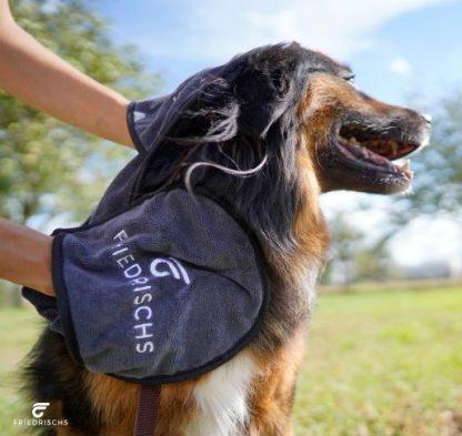 Hund wird mit Handtuch abgetrocknet